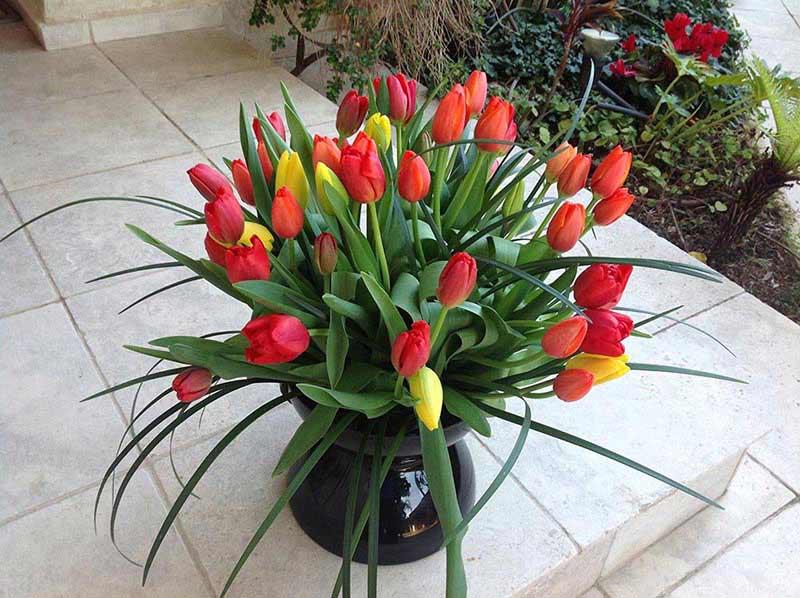 Где купить букет цветов в тель авиве, букет невесте